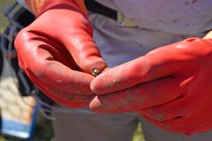Pompiers13-actualités-Les abeilles piquent la curiosité des Pompiers13